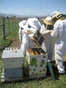 Bees Brothers working