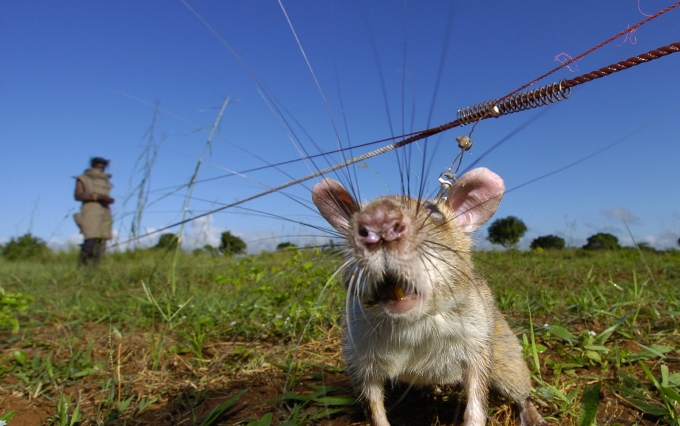 https://www.flickr.com/photos/herorats/14966259046/in/set-72157646278863659