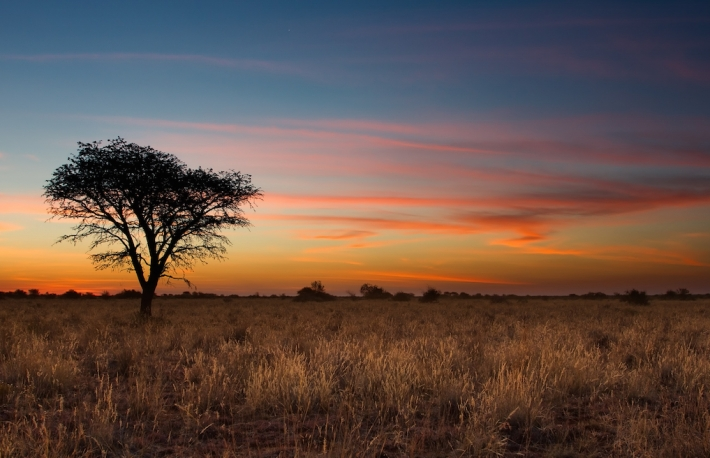 Shutterstock http://www.shutterstock.com/pic-149872490/stock-photo-lovely-sunset-in-kalahari-with-dead-tree-and-bright-colours.html?src=CpwLW41oiVrZeby8M69bJg-1-8&ws=1