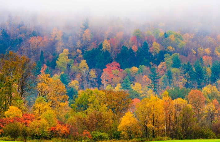 http://www.shutterstock.com/pic-209341813/stock-photo-field-of-trees-during-fall-foliage-stowe-vermont-usa.html