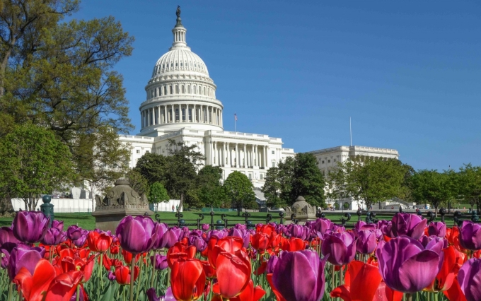 http://www.shutterstock.com/pic-189699137/stock-photo-the-capitol-with-colorful-tulips-foreground-in-spring-washington-dc-united-states-of-america.html