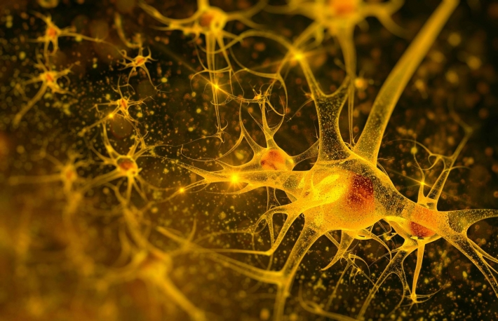 http://www.shutterstock.com/pic-170052140/stock-photo-digital-illustration-neurons.html