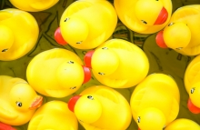 http://www.shutterstock.com/pic-4758889/stock-photo-bunch-of-rubber-ducks-floating-in-a-small-pool-view-from-above.html?src=bttig77A1r8zeFXw7yALZQ-1-17