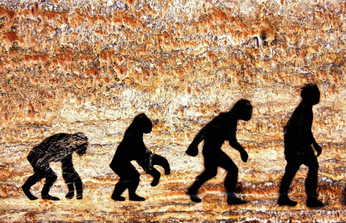 http://www.shutterstock.com/pic-96612307/stock-photo-grunge-background-of-human-evolution.html