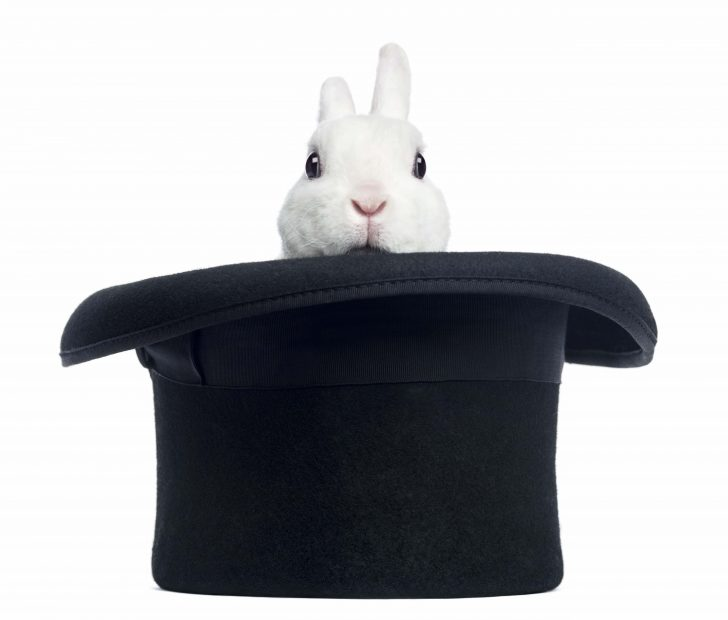 rabbit, hat