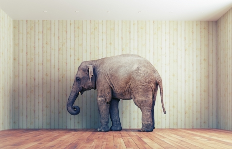http://www.shutterstock.com/pic-328628927/stock-photo-lone-elephant-in-the-room-creative-concept.html