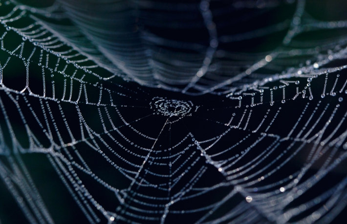 http://www.shutterstock.com/pic-147174203/stock-photo-the-spider-web-closeup-in-a-darkness.html?src=8tOdHAOUpM311drlwBttWg-1-30
