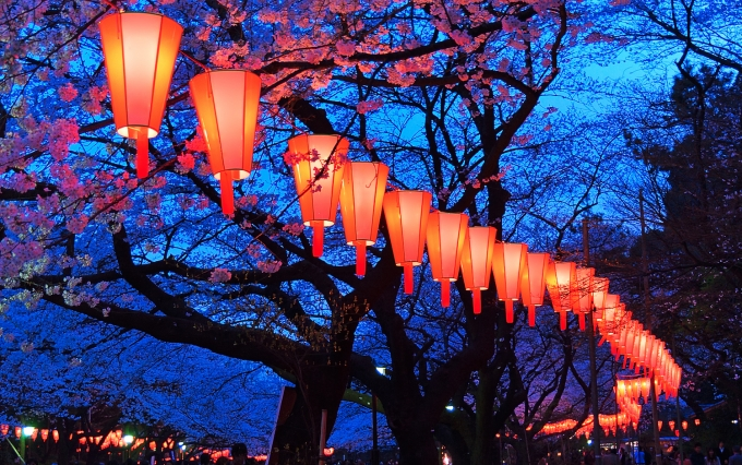 https://www.shutterstock.com/pic-362400542/stock-photo-beautiful-light-and-colours-of-japanese-lanterns-and-cherry-blossoms-in-cherry-blossom-viewing-o-hanami-festival-at-ueno-park-tokyo-japan.html?src=bv2AK7mroRDxxcsqPP_cQw-1-34