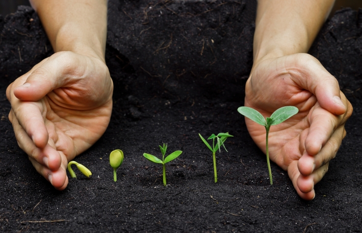 https://www.shutterstock.com/pic-186731432/stock-photo-hands-holding-plants-growing-in-a-sequence-of-seed-germination-on-soil-evolution-concept.html?src=00BLFvBcXcRFlxPBlk61iA-1-74