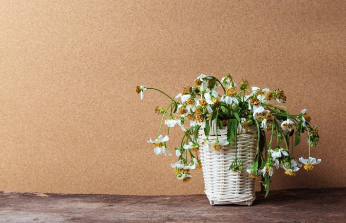 https://www.shutterstock.com/pic-518783626/stock-photo-white-flowers-in-basket-on-wooden-table-with-brown-paper-background-vintage-tone.html