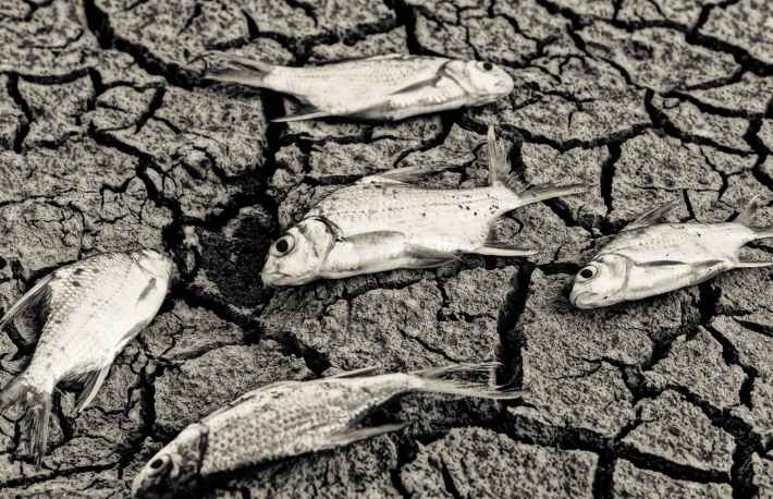 https://www.shutterstock.com/pic-227491678/stock-photo-fish-died-on-cracked-earth-drought-river-dried-up-famine-scarcity-global-warming-natural-destruction-extinction.html
