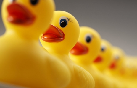 https://www.shutterstock.com/pic-410986498/stock-photo-a-row-of-yellow-rubber-ducks-all-facing-in-the-same-direction-the-focus-is-on-the-front-rubber-duck-the-image-is-photographed-from-a-low-camera-angle.html