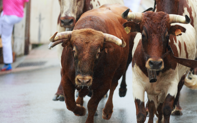 https://www.shutterstock.com/pic-480220198/stock-photo-ampuero-spain-september-08-bulls-and-people-are-running-in-street-during-festival-in-ampuero-celebrated-on-september-08-2016-in-ampuero-spain.html?src=aPAJxjvd_xRSnasCo6-oFQ-1-3