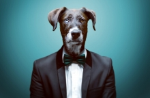 https://www.shutterstock.com/pic-271332902/stock-photo-dressy-dog.html