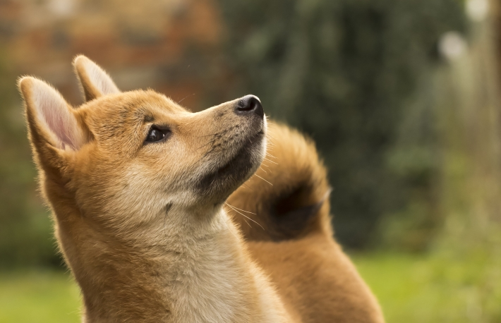 Dogecoin No Longer Pup After Doubling, Nears Barclays ...