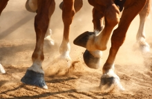 https://www.shutterstock.com/image-photo/closeup-view-on-hooves-horses-running-37072126