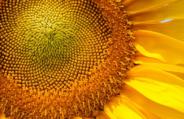 https://www.shutterstock.com/image-photo/sunflower-on-sunny-day-note-shallow-566812606