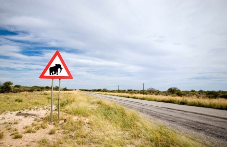 https://www.shutterstock.com/image-photo/danger-elephant-crossing-road-sign-close-74062171
