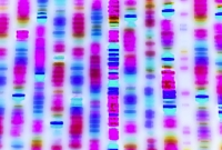 DNA, sequence