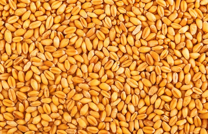 https://www.shutterstock.com/image-photo/processed-organic-wheat-grains-agricultural-background-208739860?src=uTJqFonUJ1VCw4g4DLttTQ-1-0