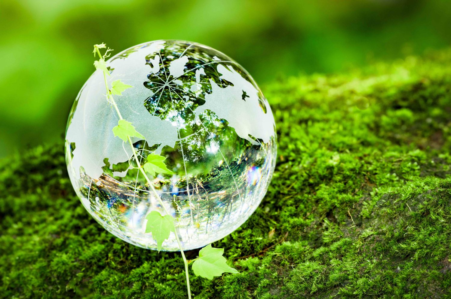 glass, globe, forest