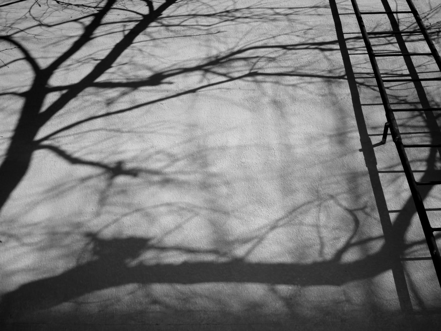 trees, shadow