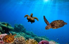 "<em><a href=""https://www.shutterstock.com/image-photo/turtle-underwater-381058741?src=aCSTBeJRl0HX_1edA3jCJg-1-7"">Turtles in Barbados photo</a> via Shutterstock.</em>"