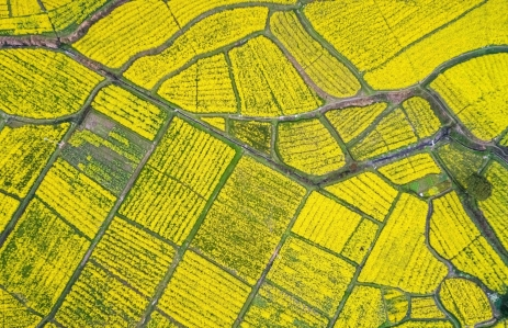 https://www.shutterstock.com/image-photo/aerial-view-rapeseed-flower-blooming-farmland-105779773