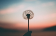 dandelion. Photo by Aleksandr Ledogorov on Unsplash