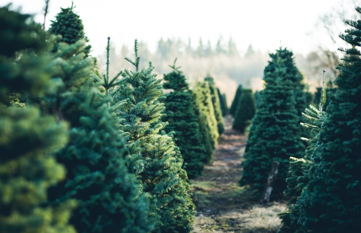 https://www.shutterstock.com/image-photo/trees-rows-christmas-tree-farm-675538726?src=xbkiksVPc7hQWkUSK8Lk_A-1-19