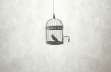 https://www.shutterstock.com/image-photo/freedom-minimal-concept-bird-open-cage-755020597?src=library