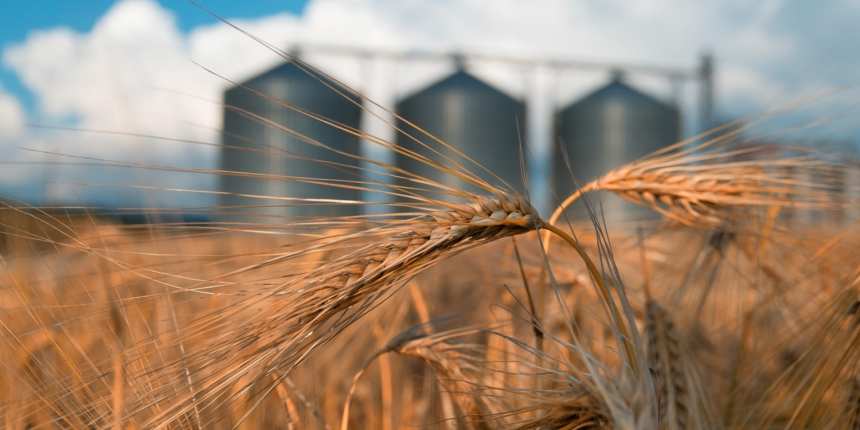 ee90699c3 Overstock s Medici Invests  2.5 Million in Grain Tech Firm s Blockchain  Pivot