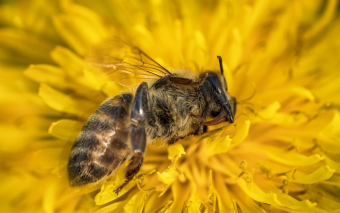 https://www.shutterstock.com/image-photo/macro-image-dead-bee-on-flower-685817296?src=r9vnIgxUfUmjTx8uTY_oKw-1-86