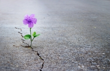 purple_flower_cracked_street_shutterstock