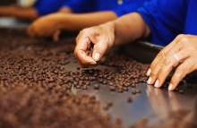 https://www.shutterstock.com/image-photo/workers-choosing-beans-best-quality-coffee-179888132