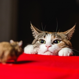 The Cat-and-Mouse Game of Crypto Regulation Enters a New