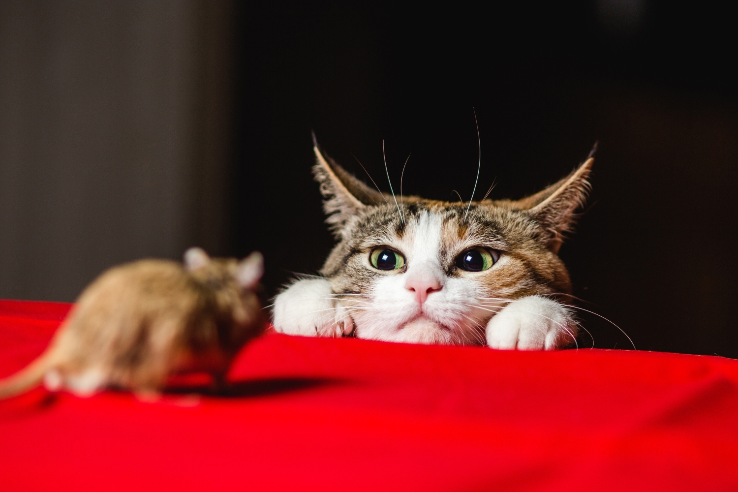 The Cat-and-Mouse Game of Crypto Regulation Enters a New Phase thumbnail
