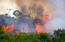 https://www.shutterstock.com/image-photo/brazilian-amazon-forest-burning-open-space-392972116?src=1rhgPB5d6cPTd8rdeynyXQ-1-1
