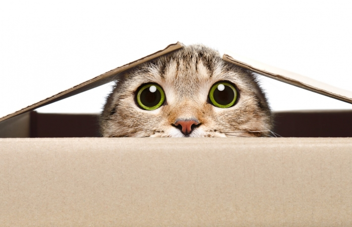 https://www.shutterstock.com/image-photo/portrait-funny-cat-looking-out-box-1132484249?src=fHytz-9XfsabF-uhgW_UJQ-1-29