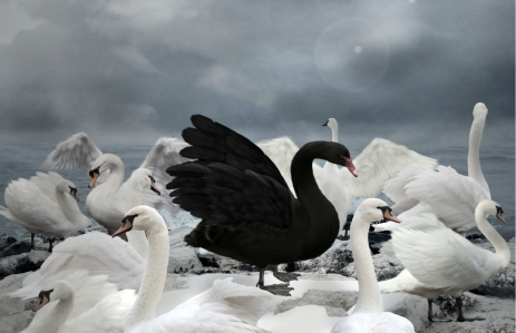 https://www.shutterstock.com/image-illustration/stand-out-crowd-black-swan-253808953?src=16281eb1-d450-4f41-8ea1-a0cbd4aa09a7-1-1&studio=1