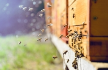 https://www.shutterstock.com/image-photo/close-flying-bees-wooden-beehive-762053431