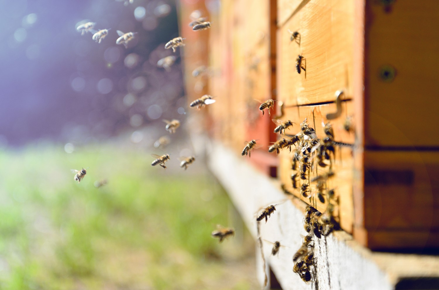 Steem Fork Faces Legal Threat From Mining Firm Over 'Hive' Name ...