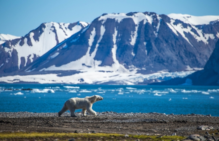 https://www.shutterstock.com/image-photo/polar-bear-south-spitsbergen-1129595294