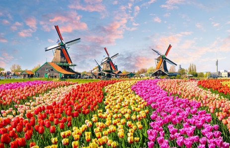 https://www.shutterstock.com/image-photo/landscape-tulips-traditional-dutch-windmills-houses-490194529