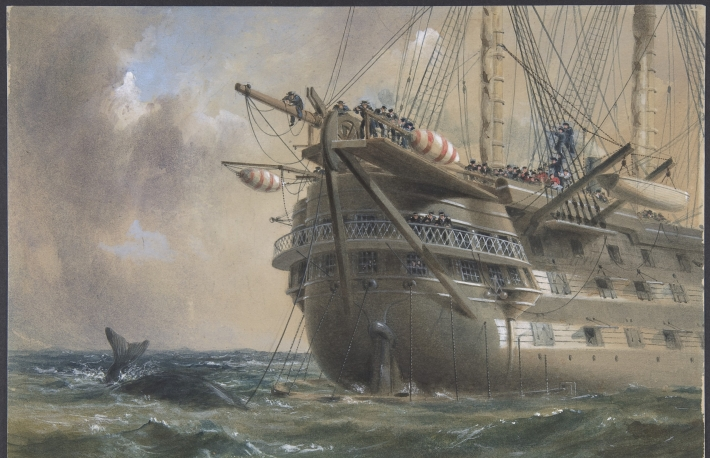 Whale, ship, sea H.M.S. Agamemnon Laying the Atlantic Telegraph Cable in 1858: a Whale Crosses the Line, by Robert Charles Dudley. Courtesy of The Metropolitan Museum of Art