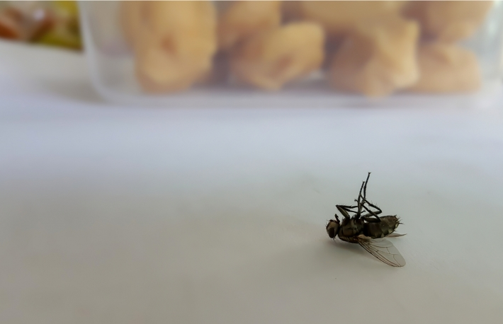 https://www.shutterstock.com/image-photo/dead-fly-on-kitchen-table-blurred-1245721576
