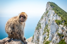 https://www.shutterstock.com/image-photo/barbary-macaque-on-rock-gibraltar-640928584