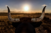 https://www.shutterstock.com/image-photo/closeup-bulls-head-horns-behind-spanish-1444784312