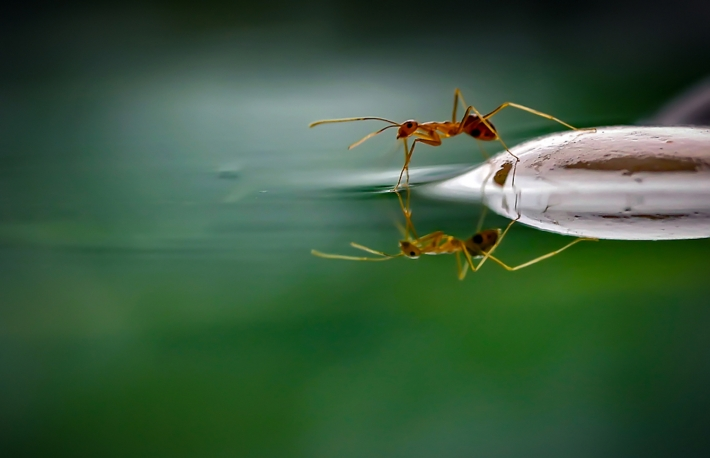 https://www.shutterstock.com/image-photo/world-ants-1284354382