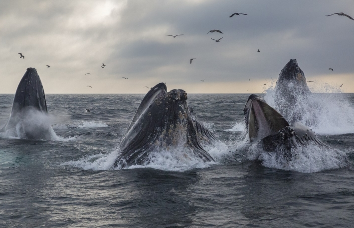 Number of Bitcoin 'Whales' Has Risen by 2% Since Halving